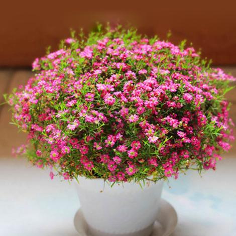 适合室内种植的10种高档盆景,喜欢盆栽的不要错过了这些