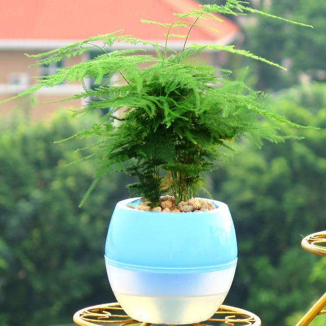 最惹人喜爱的植物,既有好的寓意,还能驱蚊杀虫,家里一定要摆放