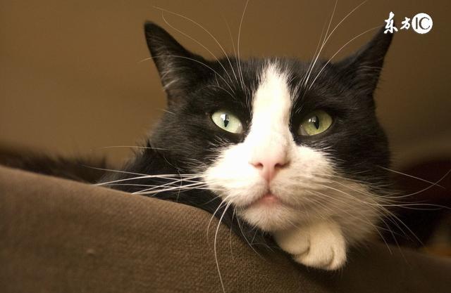 养猫的三大烦恼:猫毛 猫砂 猫窝
