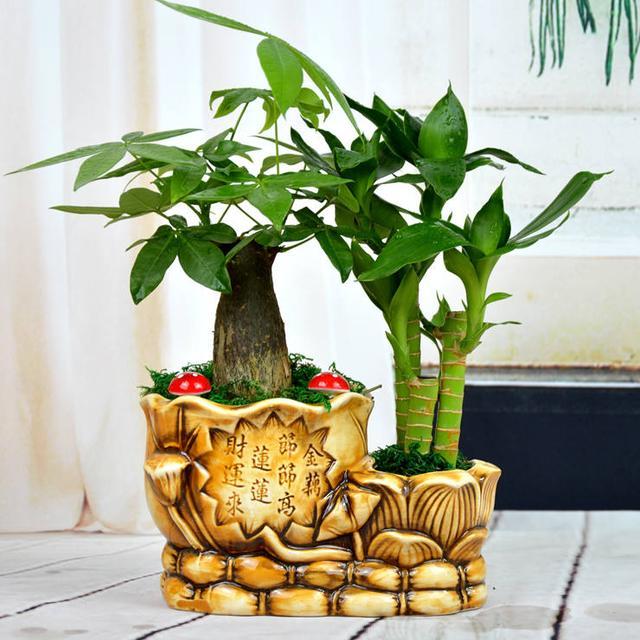 这几种盆栽能够分解有害物质,从此再也不惧甲醛和二手烟了