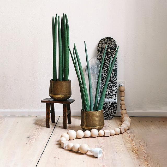 """为你生活添点""""绿"""",小盆栽也能帮你财源广进,事事如意"""