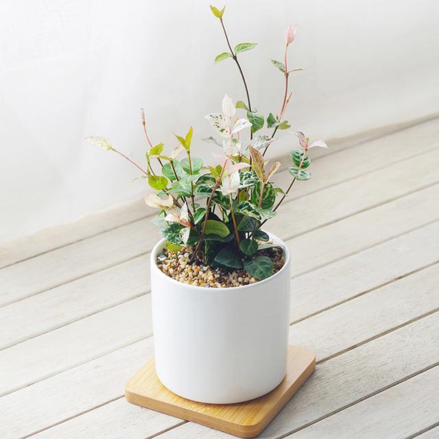 突发奇想在家里摆上这样的盆栽,净化空气还能美化家居