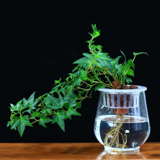 一盆水培植物,可以加湿绿化还能释放清新洋气,何乐而不为呢?