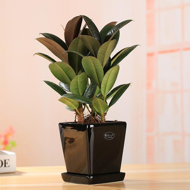 家里养这几款植物,有益于身体健康,摆在客厅还能招财