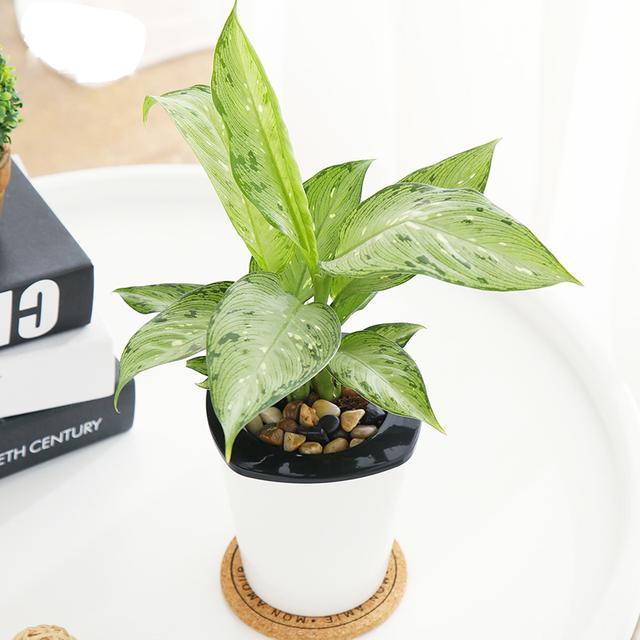 让居家生活变得有情调又绿色环保的秘籍就是养些多肉植物还有花架