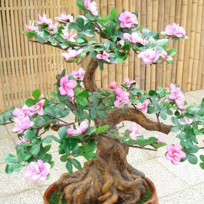 9种名贵盆栽花卉,花香远溢,满院飘香,招财又养家