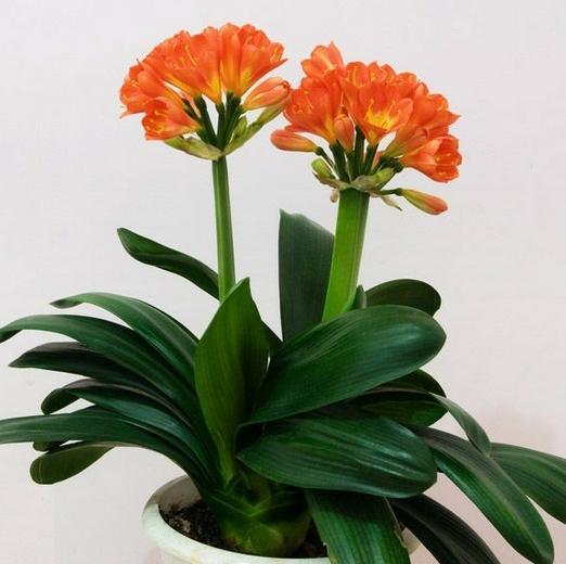 六种适合遮荫处养殖的花卉,给点阳光它就灿烂