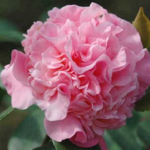 种上这八种花,没有阳光也能花开不断