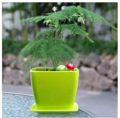 给生活增添一抹绿,空气清新自然