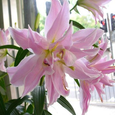 12种大富大贵的阳台庭院花卉,种上几株给家里带来好运势