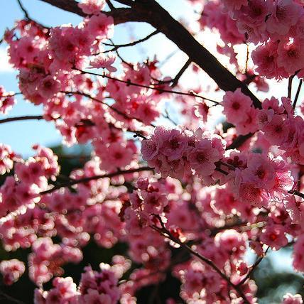 花中仙子,盘点世界上最美丽的十种花,看看有你喜欢的没