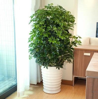 适合摆在客厅的8盆植物,能驱除蚊子,且旺财更镇宅