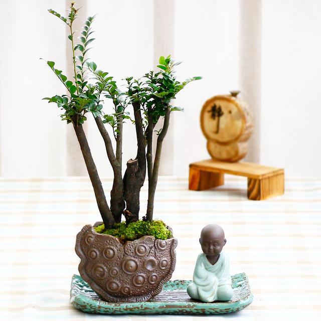 家中摆上这8种寓意好的植物,不仅能净化空气还吉利