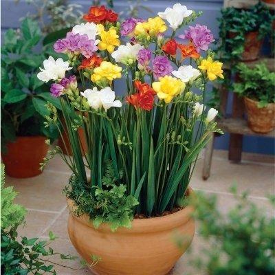 8种适合农村庭院种植的花,好看还能吃