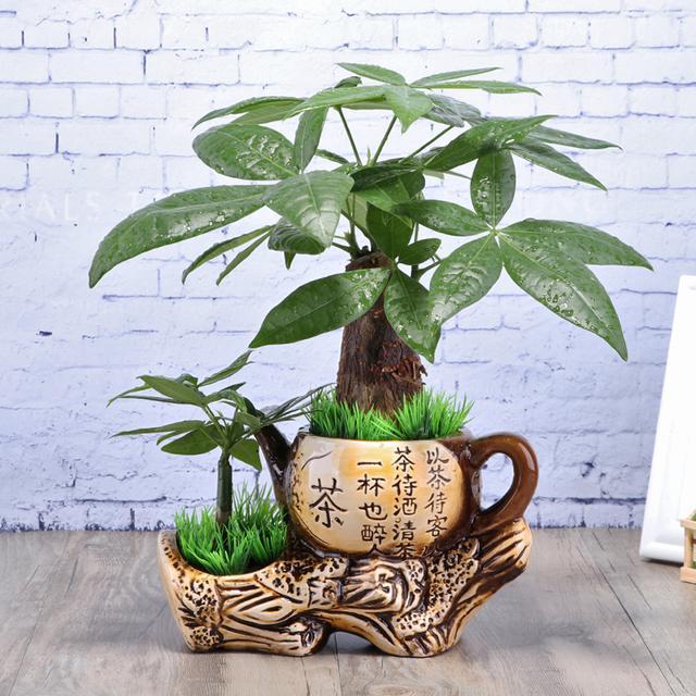 净化甲醛最有效7款盆栽,特别是第5款,净化率达到92