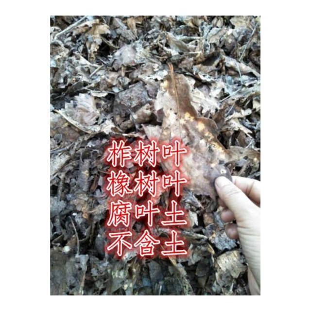 """路边一把""""烂树叶""""养出""""万种花"""",掌握方法根深叶茂,花开不断"""
