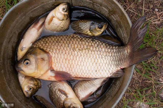如今最好的鱼饵不是蚯蚓?我国一药物,五分钟上钩,钓鱼必备