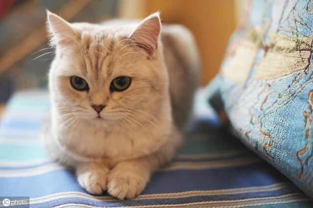 """这些食物是猫咪的""""黄灯""""食物,猫可以吃,但要严格注意喂食量"""