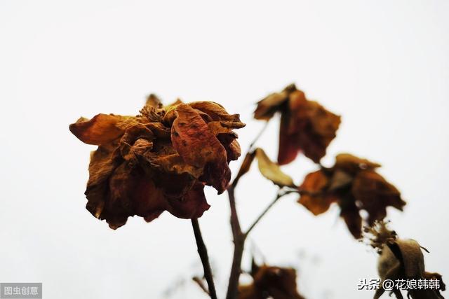 这三种花天生就是来填补冬季和早春开花空白期的专门开在冷凉季