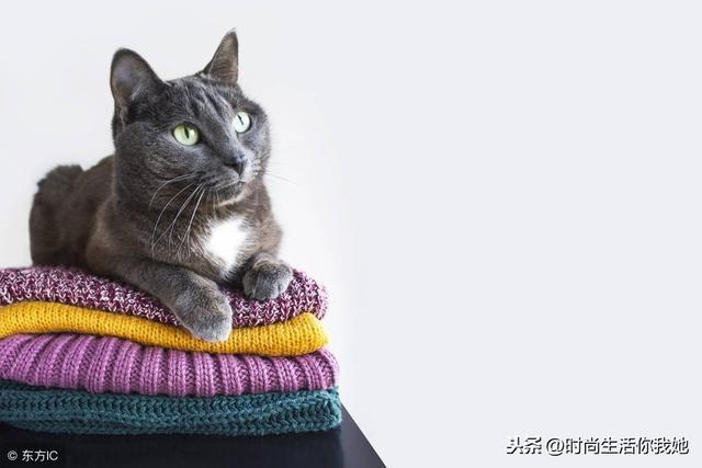 今年毛衣最流行的款式,谁穿都好看!