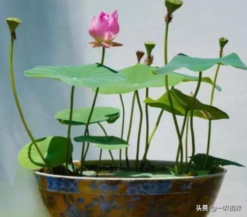 喜欢花的人注意了,种这几款花卉,花开十里飘香,香到没朋友