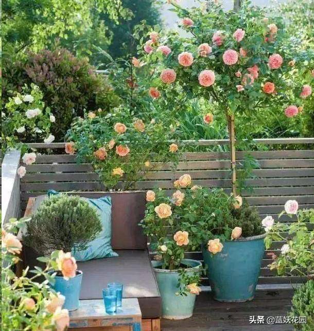 盆栽植物入室后容易萎蔫?注意这两点