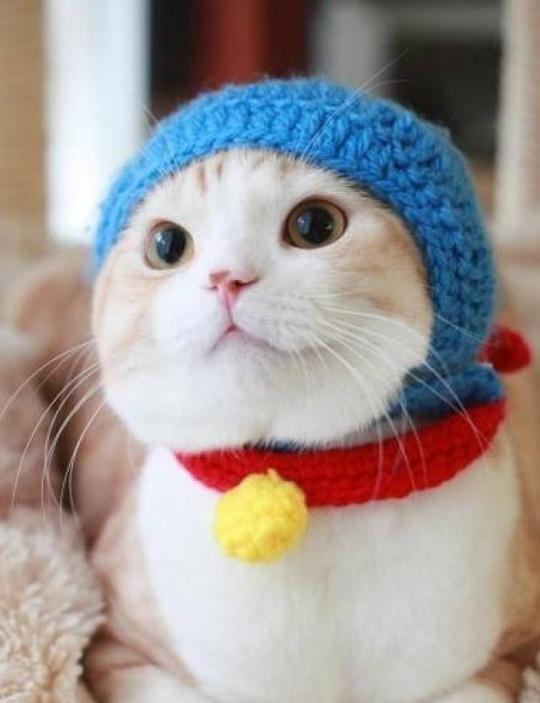 猫咪并非从小养更粘人,是否爱亲近人得看这3点,铲屎官请注意