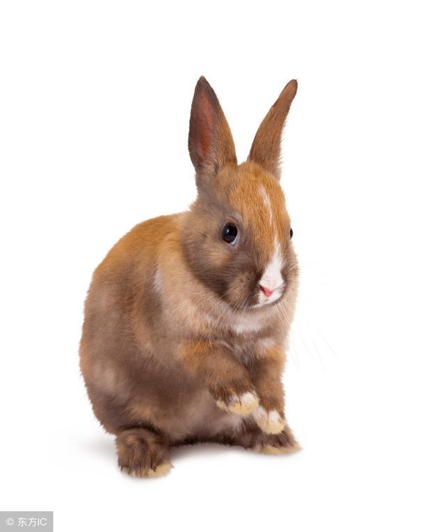 """""""兔兔兔""""只要把握好身边的机会,再穷也能成大富豪!"""