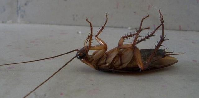 家里蟑螂太多怎么办?只要3片叶子就把厨房蟑螂连根拔起,厉害了