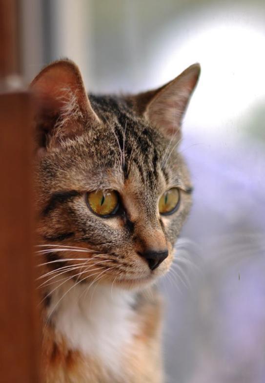 """猫的""""猫言猫语""""你真的懂?学会这3点,了解猫咪行为背后的含义"""