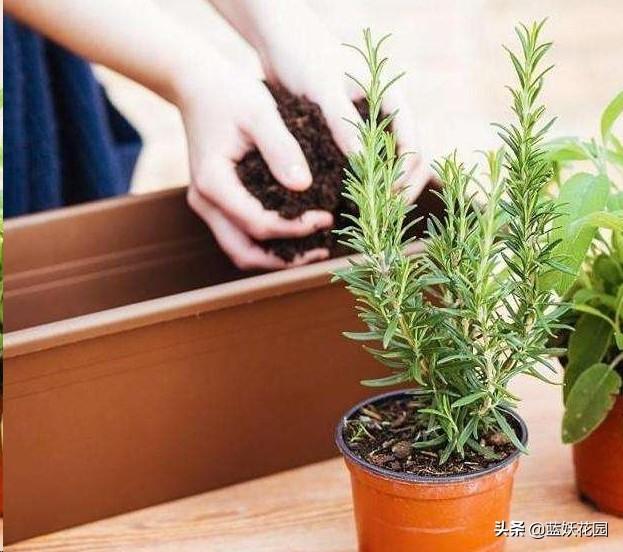 植物换盆后怎么判断是否服盆?注意这3点