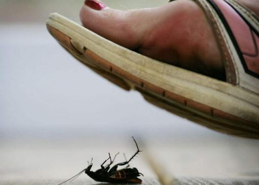 """还傻傻用脚""""踩蟑螂""""?谨记这个方法,让家里一个蟑螂都""""不留"""""""
