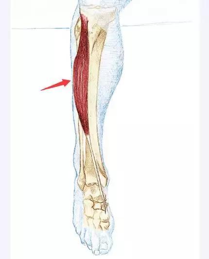 很多跑者都会小腿痛,跑几公里没劲,到底怎么回事?