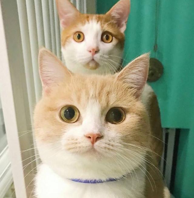 怎样让猫咪和人亲?有时非语言交流方式,才是和猫建立友谊的方法