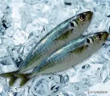 连李嘉诚都点赞的鱼,鱼类寒门中的贵子,饭桌中的美味,太便宜了