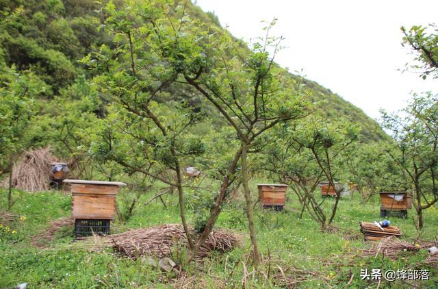 好蜂蜜15元2瓶包邮,真的能买到吗?养蜂人终于讲了实话