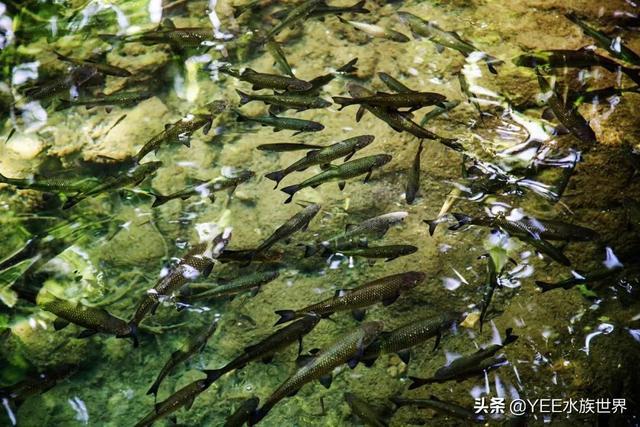 从偷捕到走私,炒作成保护动物的鱼,悄悄卖出天价