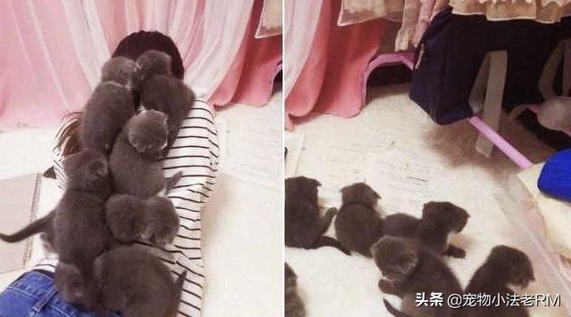 6只小猫很喜欢跳到女生背上,用肉垫帮她按摩,网友:神仙日子
